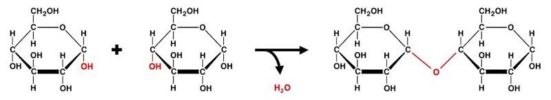relationship between macromolecules and monomers of polysaccharides