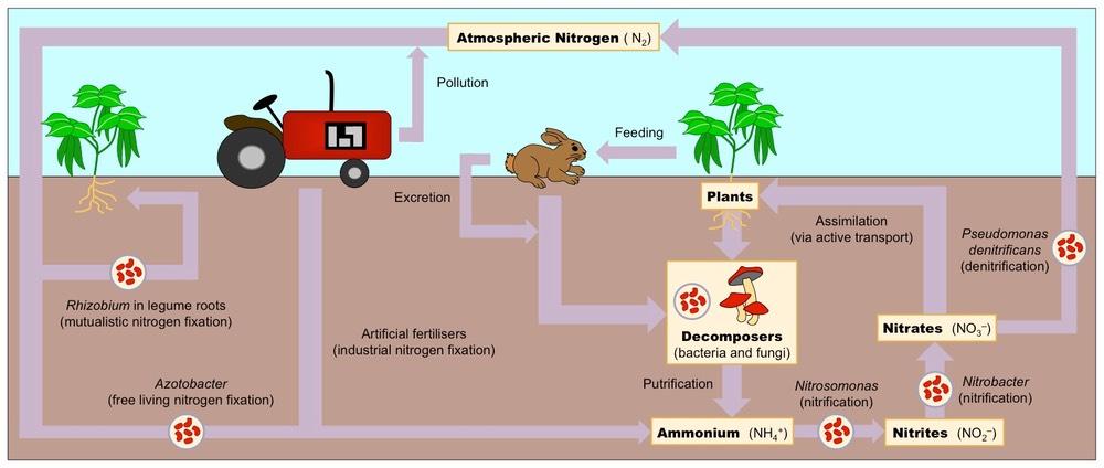nitrogen cycle nasa - photo #37